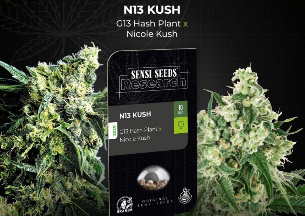 N13 Kush feminized seeds, cannabis, marijuana, weed, pot
