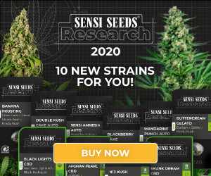 Sensi Seeds Research, cannabis seeds, marijuana, feminized, strain, automatic, autoflowering