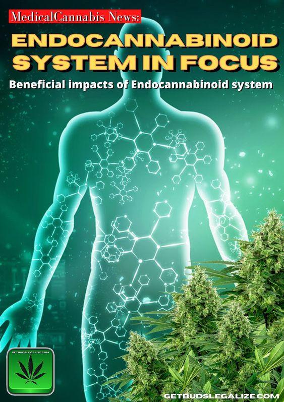 Endocannabinoid system in focus, cannabis, medical, marijuana, weed, pot, thc, cbd