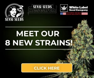 Sensi Seeds Research, cannabis seeds, marijuana, feminized, strain, automatic, autoflowering, super skunk