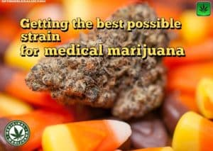 Getting the best possible strain for medical marijuana, cannabis, weed, pot, plant