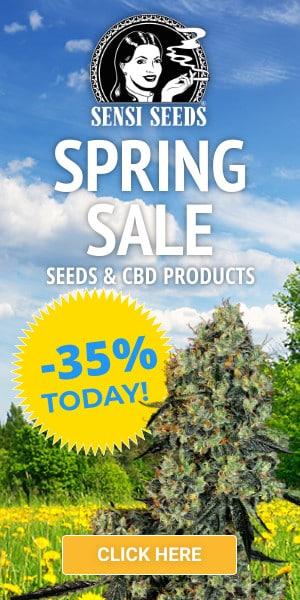 sensi seeds, cannabis, marijuana, weed, sale