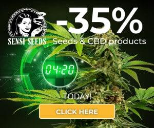 sensi seeds, cbd, thc, feminized, marijuana, weed, pot, cannabis, plant