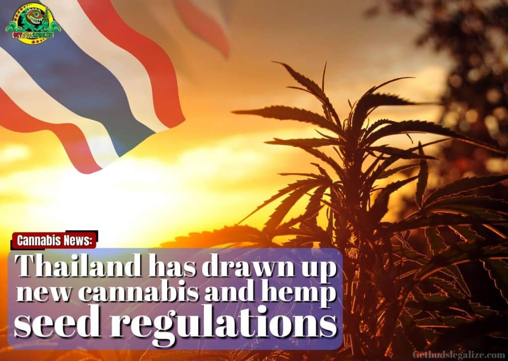 Thailand has drawn up new cannabis and hemp seed regulations, cannabis, marijuana, weed, pot, legalization, medical