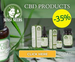 sensi seeds, cbd, thc, plant, cannabis, marijuana, weed pot