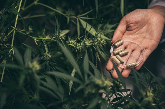 THC detox kits, herbal capsule, detox from cannabis, marijuana, weed, pot, plant, seeds, medical