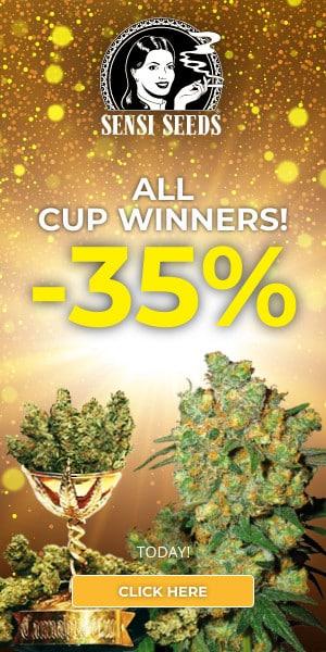 sensi seeds, cannabis, marijuana, weed, pot, medical