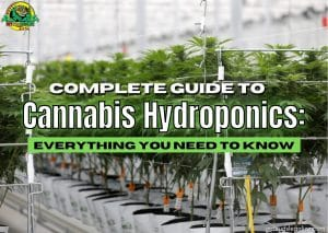 Complete Guide To Cannabis Hydroponics: Everything You Need To Know, cannabis, marijuana, weed, pot, growing, flowering