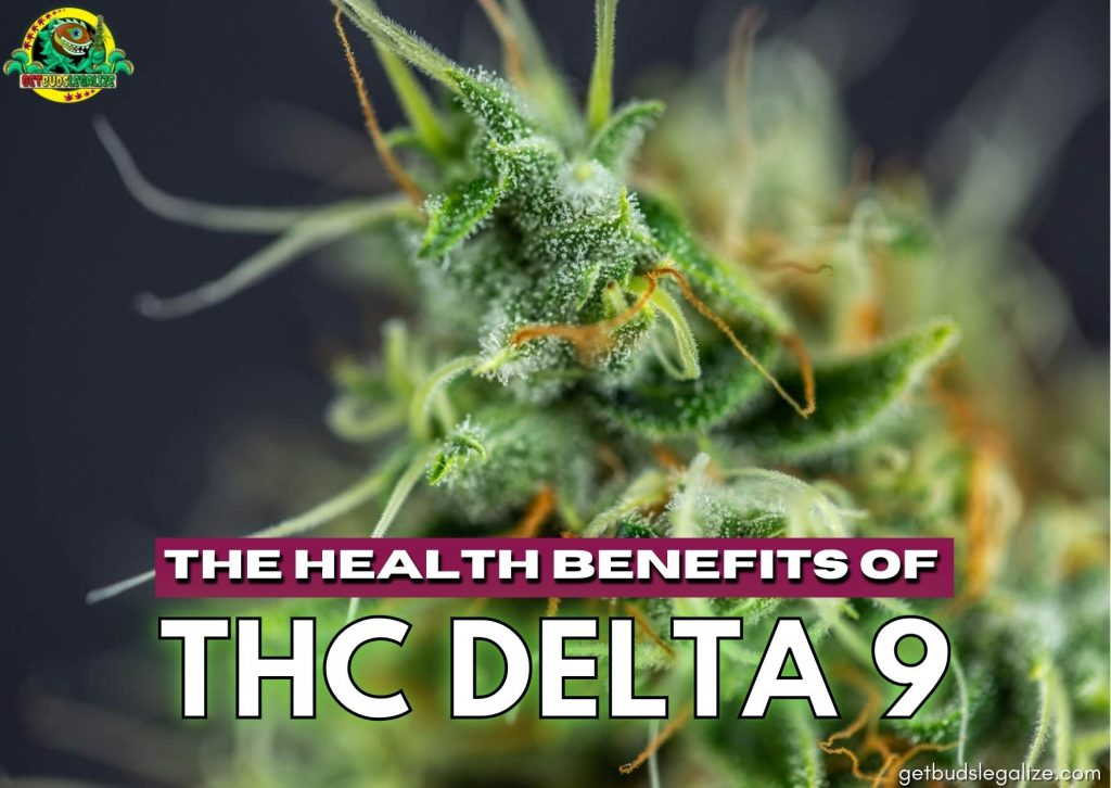 The Health Benefits Of THC DELTA 9, Buds, Everything You Need To Know, cannabis, marijuana, weed, pot, growing, flowering
