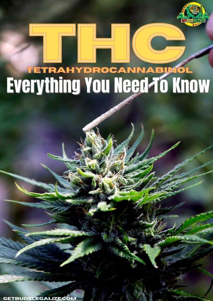 Tetrahydrocannabinol , THC ,Health, cannabis, marijuana, weed, medical, pot, CBD, THC